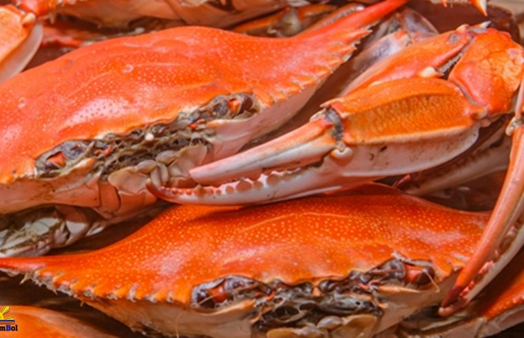 Kasag (Steamed Blue Crabs)